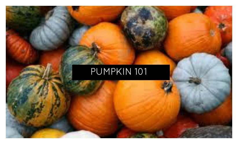 Pumpkin 101 – Everything you need to know.