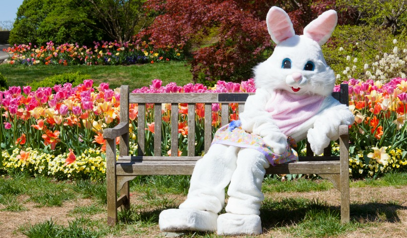 Find the Easter Bunny In Calgary